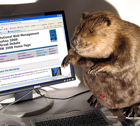 Beaver with a computer